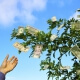 money doesn't grow on trees - Complete Controller